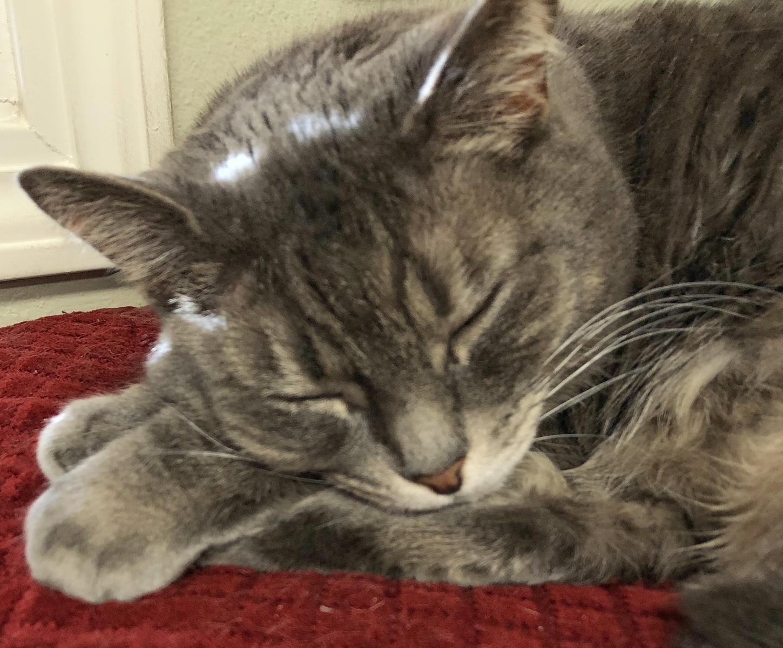 Miranda Sleeping