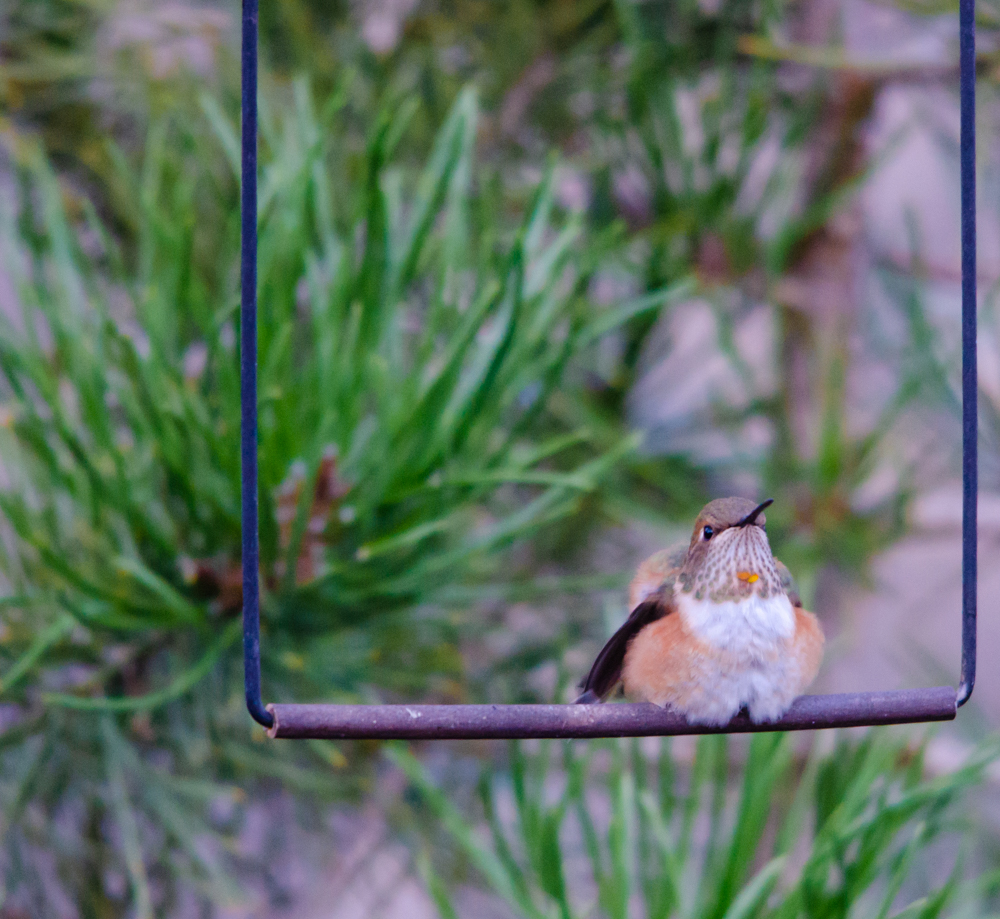 Hummingbird on a Swing