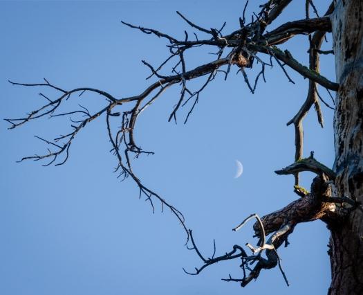 Moon shining through