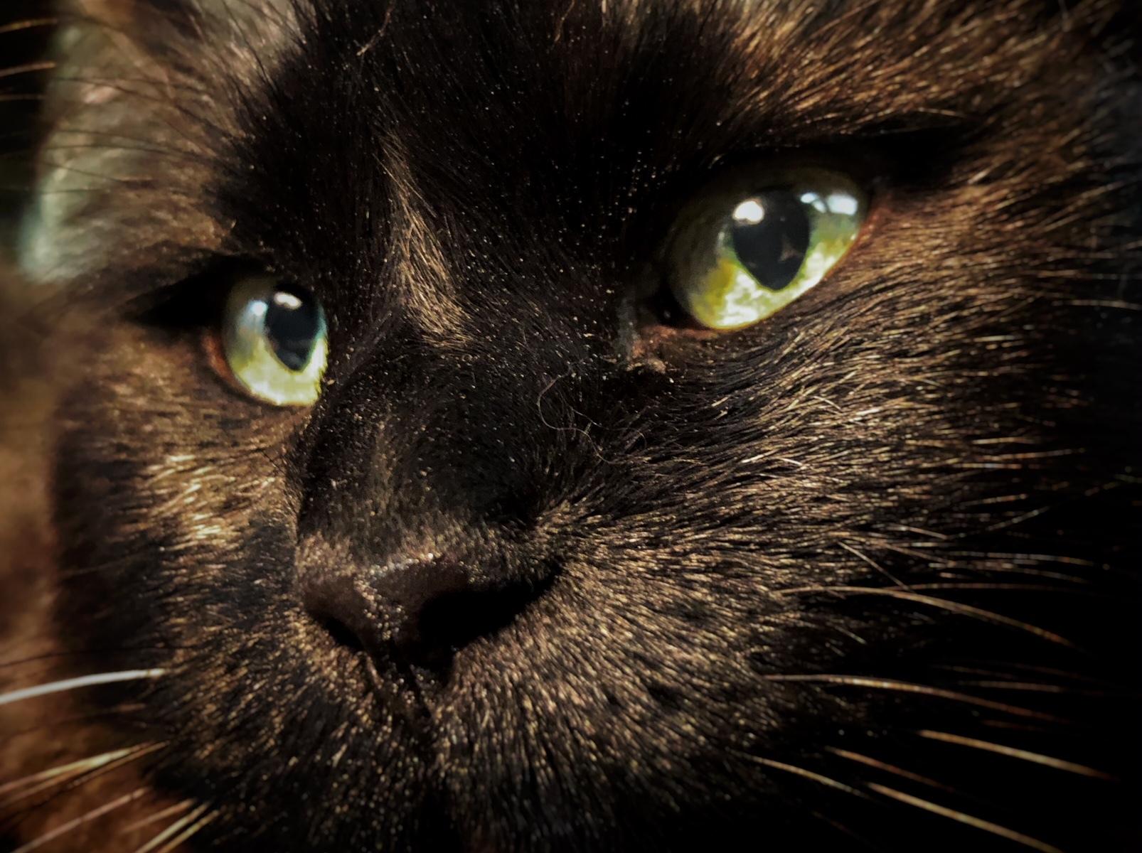 Black Cat Munch