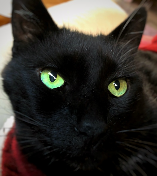 Black Cat Simba