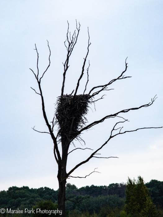 very large nest