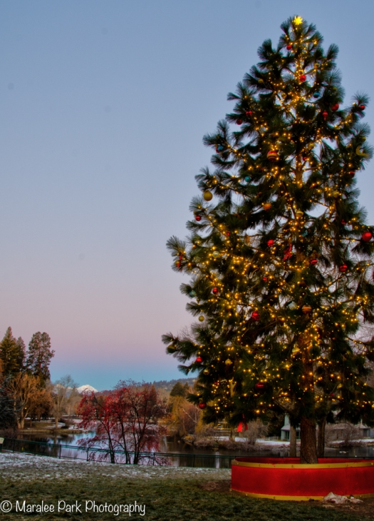 Bend Oregon City Christmas Tree